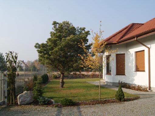 Ogród z sosnami w roli głównej
